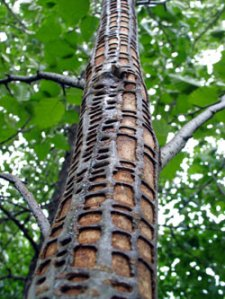 KPA SOUTHEASTALASKA DAMAED TREE