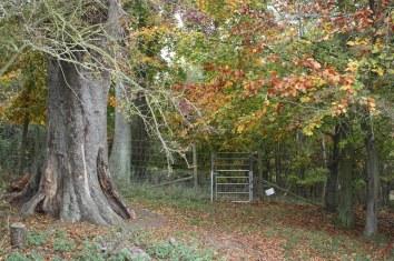 KPAThe poem tree 2