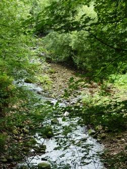 River Calder at Church Wood Calder Vale