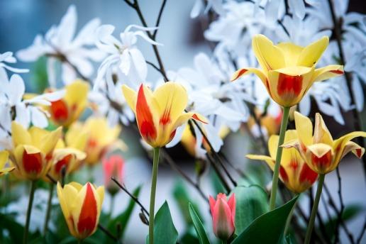 Keep flowers