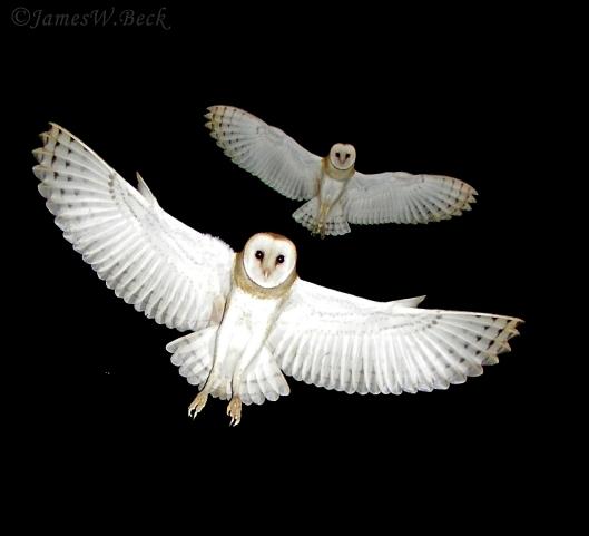fiona owlscorrect